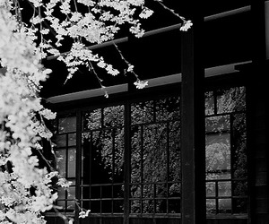 japan, photography, and flowers image
