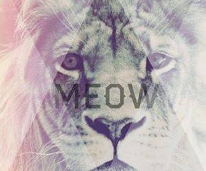 meow, lion, and tiger image