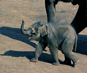 baby, elephant, and zoo image