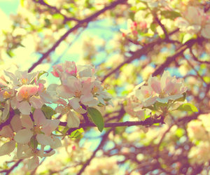 flowers, seasons, and spring image