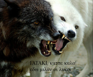 greek, text, and wolf image