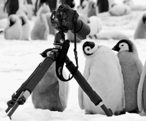 penguin, camera, and animal image