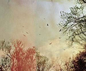 bird, sky, and tree image