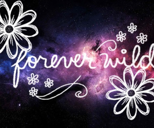 cool, flower, and forever image