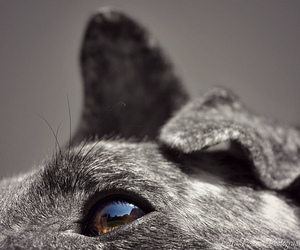 black, color, and dog image