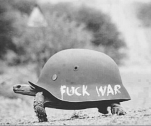 animal, war, and black and white image