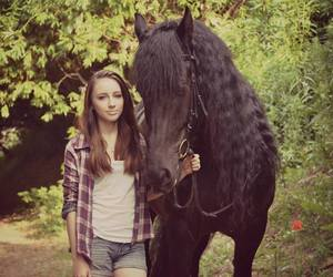 horse and friese image