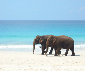 beach, boat, and elephant image