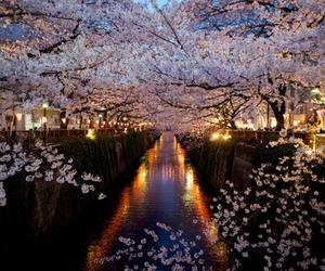 flowers, japan, and sakura image