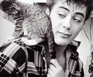cat, robert downey jr, and black and white image