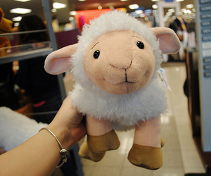 cute, sheep, and photography image