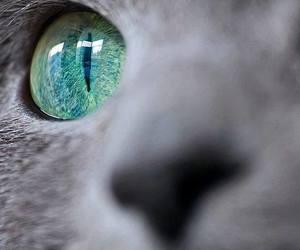 animal, eyes, and cute image