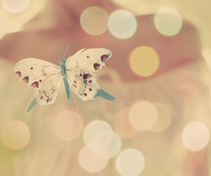butterfly and pretty image
