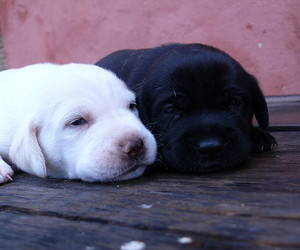 black, dogs, and white image