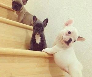 beautiful, dog, and amor.gucci image