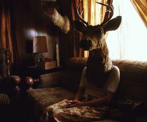 girl, photography, and deer image