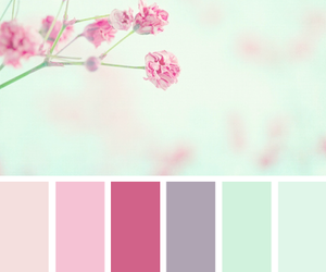 pink, colors, and flowers image