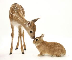 deer, animal, and bunny image