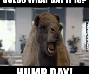 funny, humps, and wednesday image
