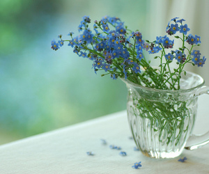 flowers, forget-me-not, and garden image