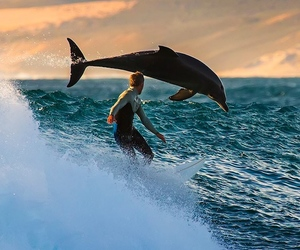 dolphin, surf, and sea image