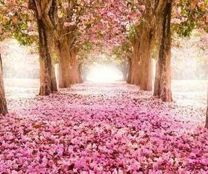 beautiful, tree, and trees image