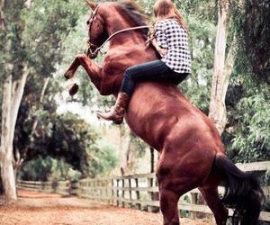 horse image