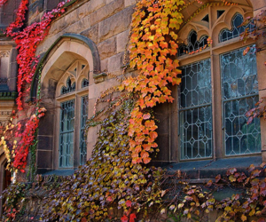 autumn, leaves, and ivy image