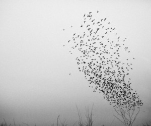 birds, black and white, and photo image