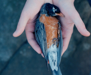 bird, dead, and death image