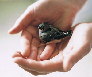 bird, hands, and vintage image