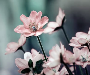 blossom, nature, and flower image
