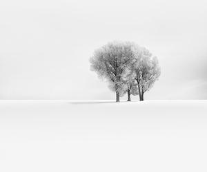 blizzard, pretty, and snow image