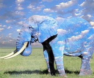 elephant and sky image