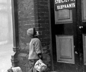 elephant, black and white, and child image