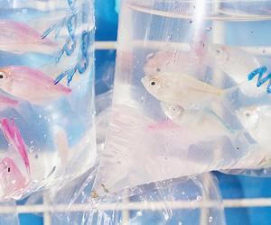 fish, animal, and blue image