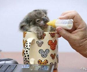 australia, baby, and feeding image
