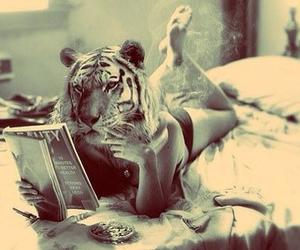 tiger, smoke, and bed image