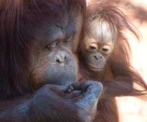 mother and child, cute, and how adorable image
