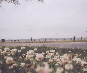 flowers, vintage, and nature image