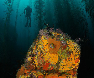 california, diver, and fins image