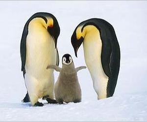 penguin, family, and love image