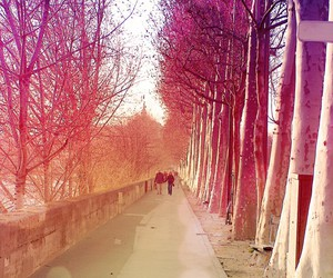 fall, paris, and tree image