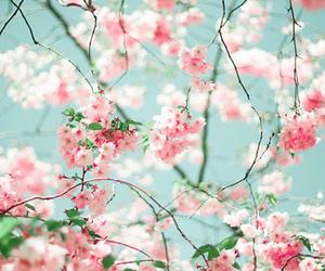 beautiful, blooms, and botanical image