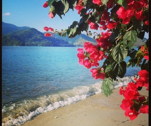 flores, mar, and paraty image