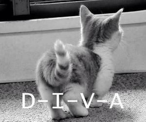 diva and cat image
