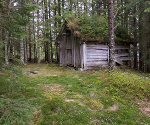 cabin, forest, and landscape image
