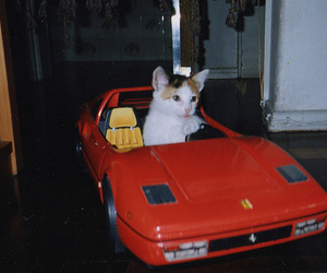cat, car, and photography image