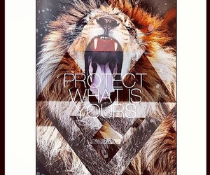 lion, roar, and protect image