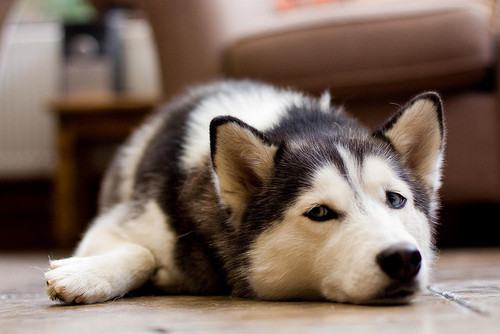 dog, cute, and puppie image